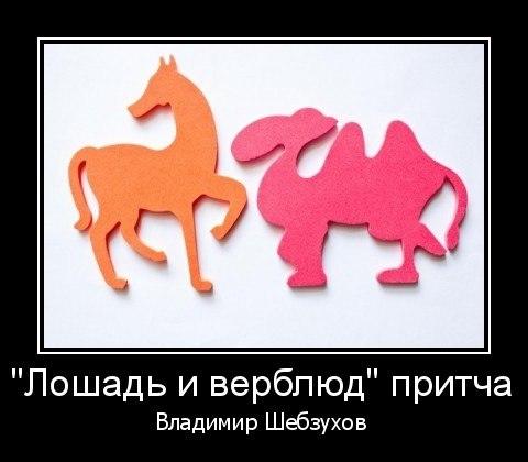 «Лошадь и верблюд» (Владимир Шебзухов)