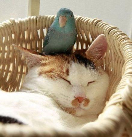 Стих крылова кот