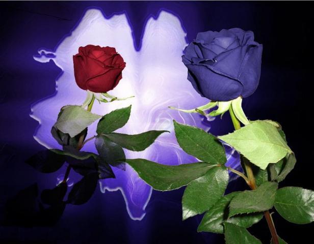 С надписями картинки синие розы, марта красивые