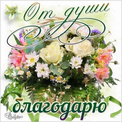 Светлана спасибо картинки с надписями, днем рождения прикольные