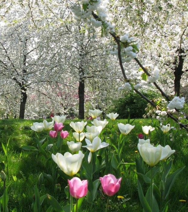 Мир весенний - чудо-чудное..!