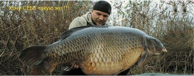 fishhungry форум отзывы