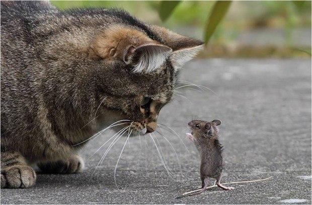 Мышки и кот песня