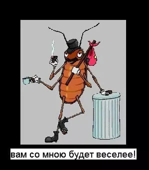 прикольные картинки таракан украшения