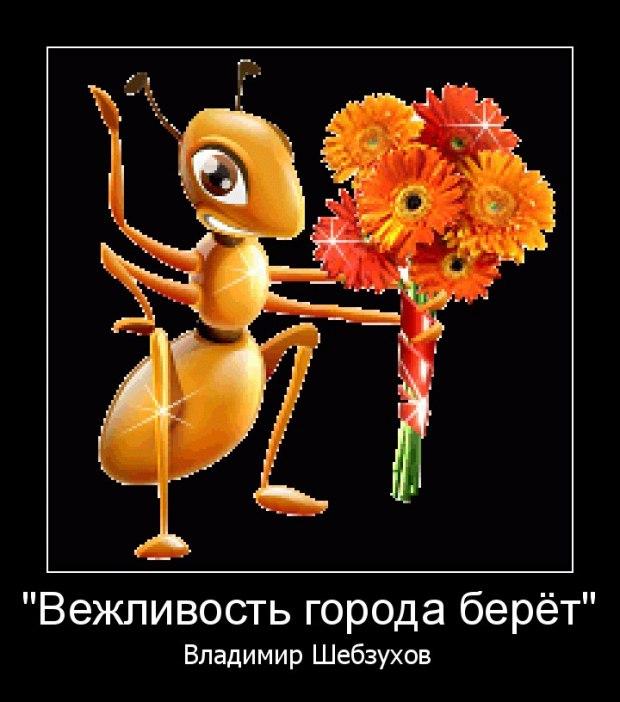 Вежливость города берёт (Владимир Шебзухов)