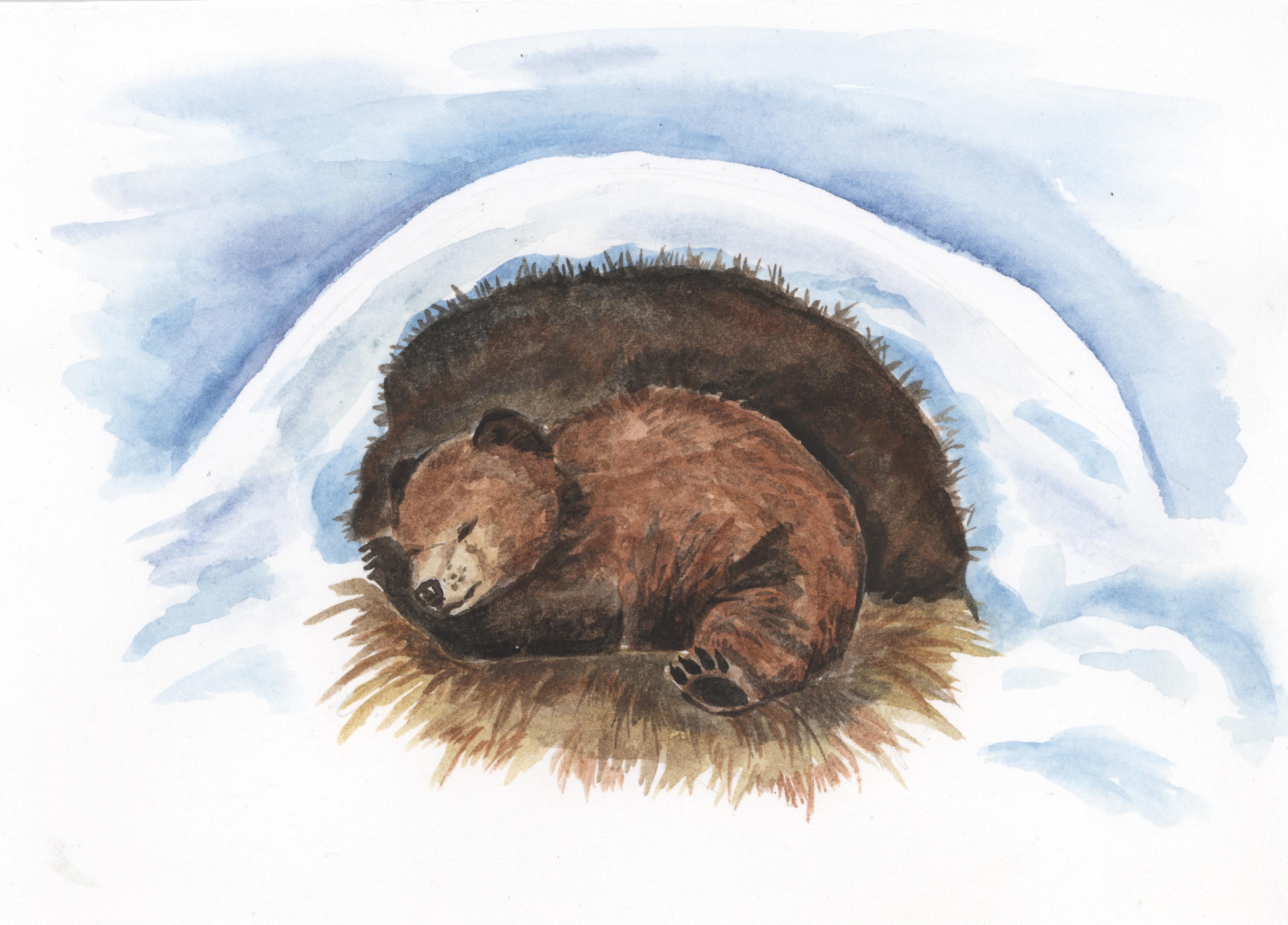 Картинка берлоги с медведем