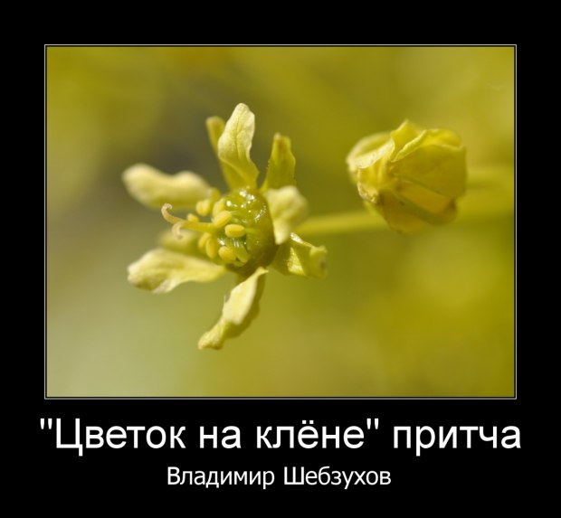 «Цветок на клёне» (Владимир Шебзухов)