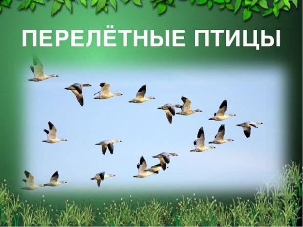 Осенью птицы кружатся...