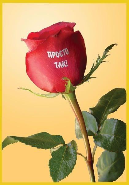 Картинки с цветами и надписями для девушки