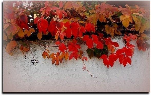 Осень приказала... Романс (Музыка и исполнение Евгений Евдокимов)