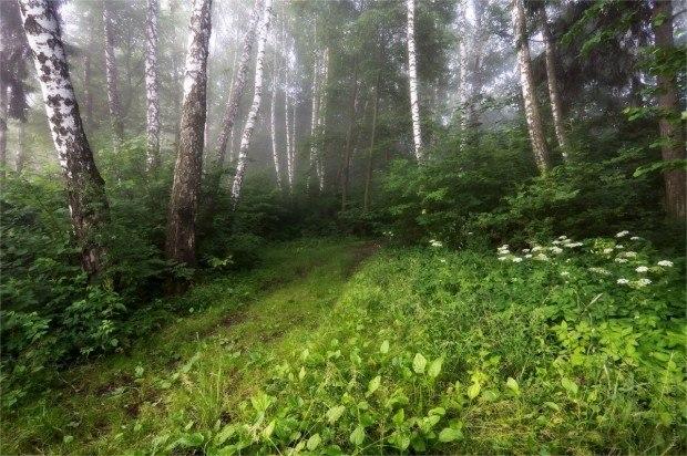 Ах, какая сегодня в лесу тишина!