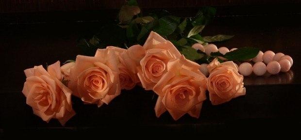 Чайная роза песня текст