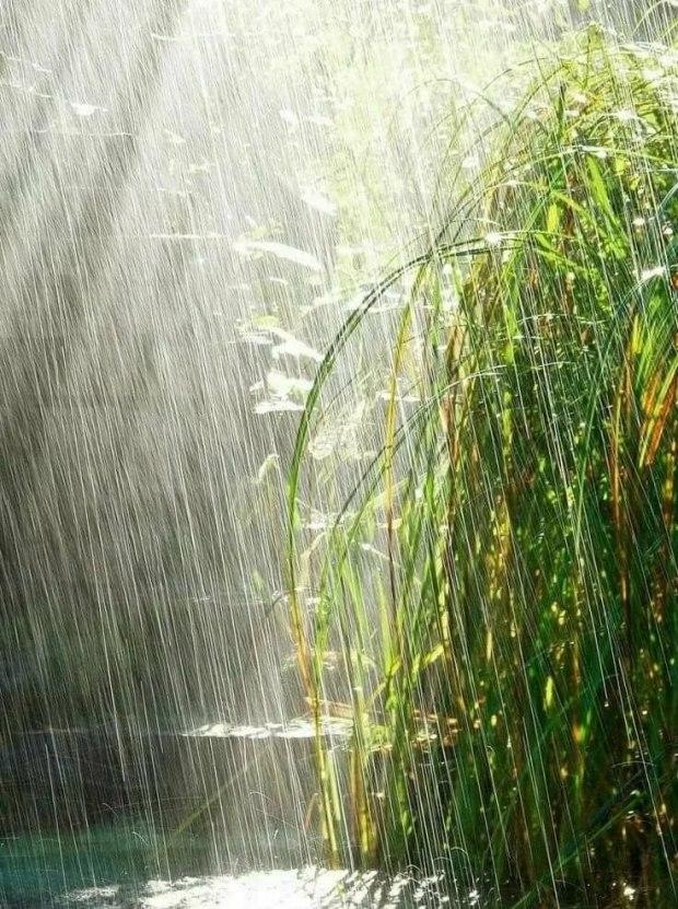 мужа меня картинка красивая с дождиком так сложно как