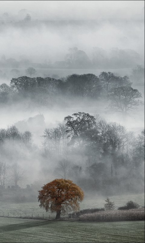 Туман облаками седыми...