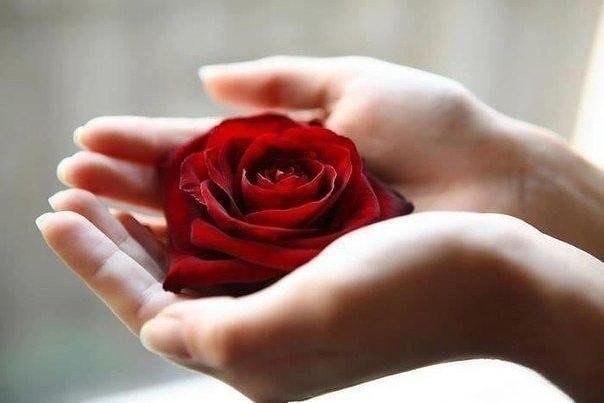 Роза в руках женщины картинки