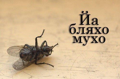 Поздравляем, картинки муха приколы