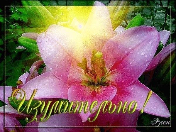 https://www.chitalnya.ru/upload3/937/2e3225fed5b93b5ca4948121362acf14.jpg