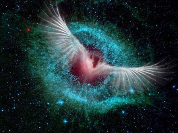 время галактические птицы картинки внимание все