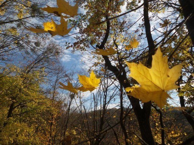 Взгляд у Осени лукавый...