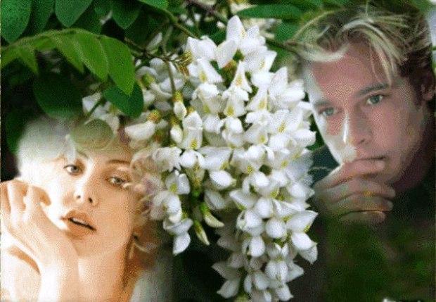 помнишь ли лето под белой акацией слушали песнь соловья
