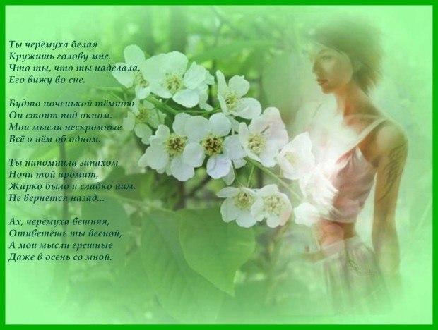 Букет черемухи белой душистой...(читает Светлана Калинина 5)... ~ Проза  (Рассказ)