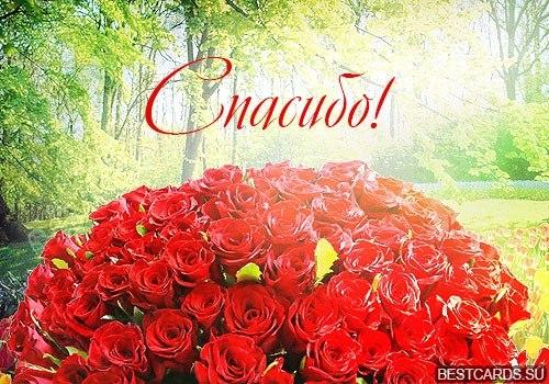 Открытка днем, открытки красивые розы спасибо