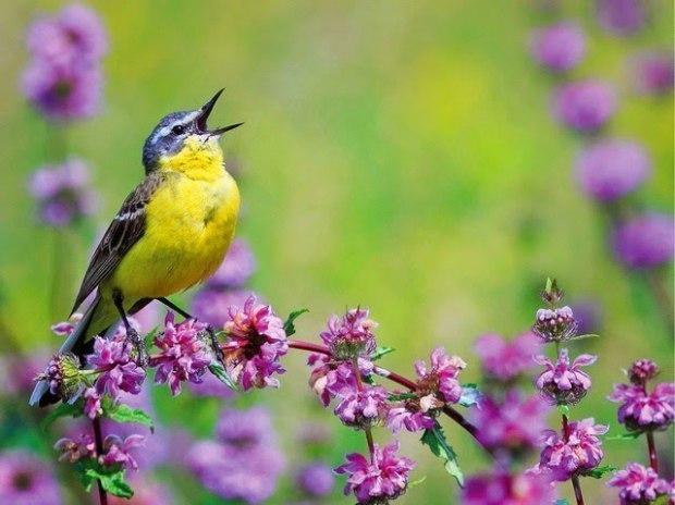 картинка птица музыка