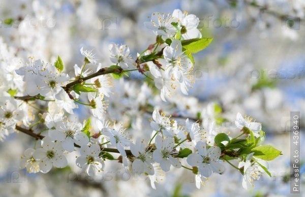 Сказка Весны...